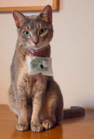 cat@log