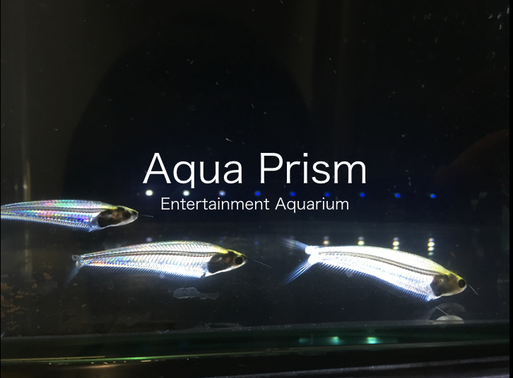 AquaPrism: Dynamically Changing the Color of Aquatic Animals